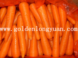 Fresh New Carrot Good for Health pictures & photos