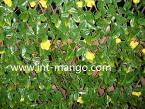 Artificial Leaves with Flowers Willow Fence (MW16017) pictures & photos