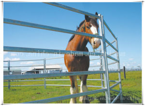Steel Horse Paddock Fence/ Yards Panel Wholesale pictures & photos