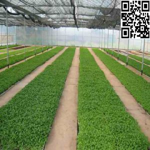 Meyabond HDPE Anti-Insect Net with UV Treated for Greenhouse pictures & photos