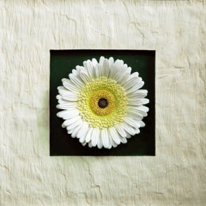 Resin White Gerbera Flowers Wall-Mounted Decoration for Home Decoration or Hotel Decoration