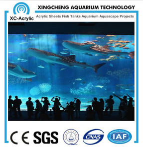 Giant Aquariums/Wall Hanging Aquarium/Clear Perspex Sheet pictures & photos