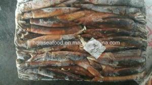 Fresh Frozen Squid pictures & photos