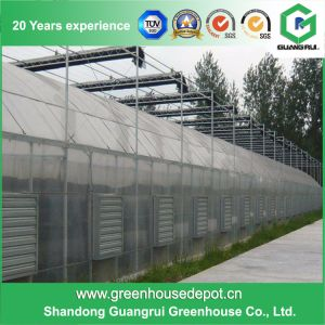 Multi-Span Tunnel PC Greenhouse for Planting pictures & photos