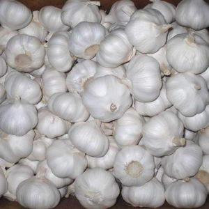 New Crop Fresh Garlic Good Crop pictures & photos