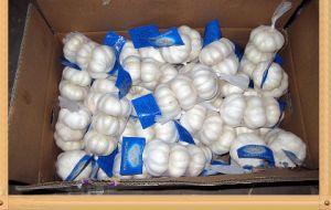 New Crop Fresh Garlic (5.0) pictures & photos