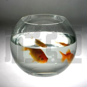 L Ball Fish Bowl (SY363-CR)