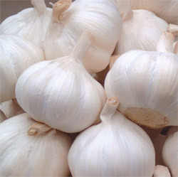 Export Good Quality Pure White Garlic pictures & photos