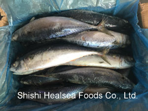 Board Japanese Mackerel with 400-600g pictures & photos