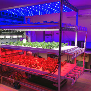 Most Popuplar 12W Hydroponic LED Grow Light E27 Lamp pictures & photos