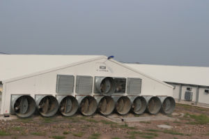 Prefabricated Broiler Poultry Shed Design pictures & photos
