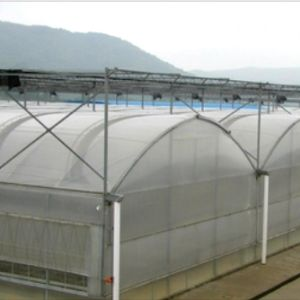 Multi Span Agricultural Plastic Film Green House pictures & photos