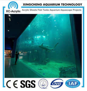 Clear Super Viewing Acrylic Panel of Viewing Aquarium Project pictures & photos