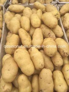 2015 Fresh Potato (HOT sale) pictures & photos