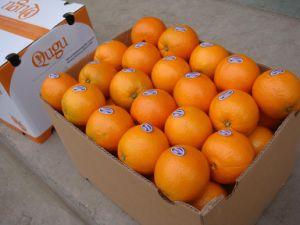 Fresh Navel Orange pictures & photos