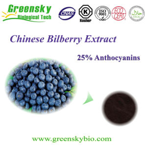 Greensky Good Quality Europe Bilberry Extract with Anthocyanins