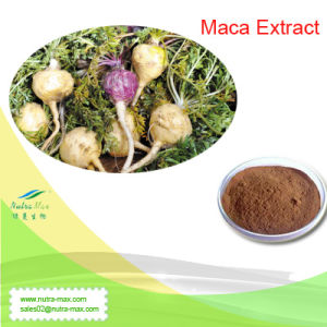 100% Natural Maca Extract (Macamide 45% 60%, Ratio: 4: 1~20: 1) --Nutramax Supplier