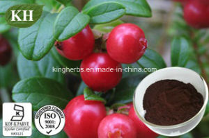 Lingonberry Extract Powder, Red Bilberry Extract Powder CAS No.: 84082-34-8 pictures & photos
