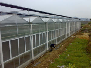 Factory Supplier Agriculture Multi-Span Venlo Polycarbonate Sheet Greenhouse for Sale pictures & photos