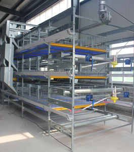 Poultry Equipment H Type Bird Breeding Cage for Chicken Farm pictures & photos