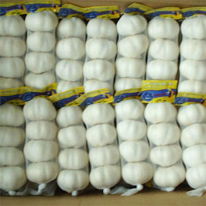 High Quality Chinese Pure White Garlic pictures & photos