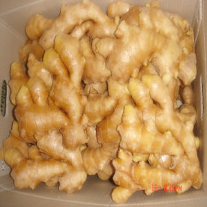 2016 Preserved Fresh Ginger From China pictures & photos