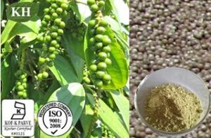 Top Quality&Natural Black Pepper Extract (5%-98% Piperine) pictures & photos