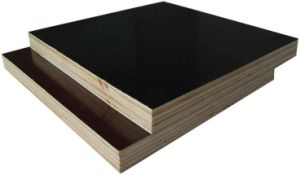 Film Faced Poplar/Birch/Eucalyptus Combi Plywood for Building