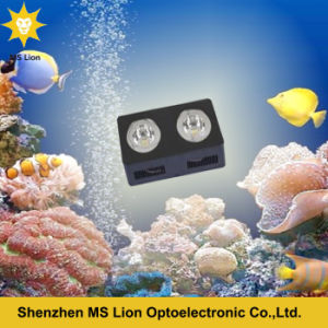 Dimmable Sunrise and Sunset Aquarium for Coral Reef pictures & photos