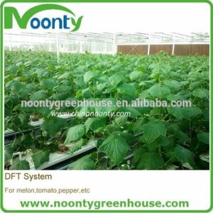 Farm Hydroponics Growing System for Tomato, Lerruce, Cucumber,Eggplant, Pepper,Herbs,Strawberry Planting with Commercial Tunnel and Multi-Span Gothic Greenhouse pictures & photos