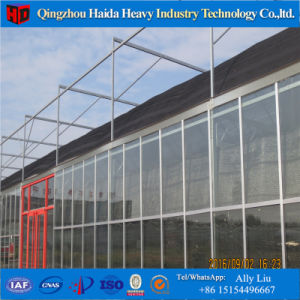 Larger Multi-Span Agricultural Film Greenhouse pictures & photos