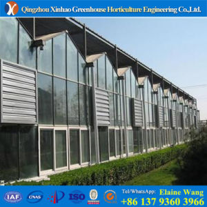 Promotion Multi Span Glass Greenhouse for Hydroponic Nft pictures & photos