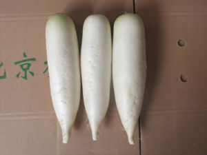 New Crop Competitive Fresh White Radish (450-500g) pictures & photos