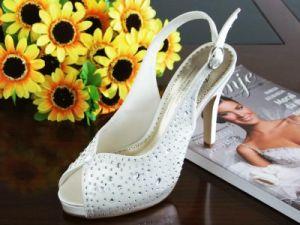 Lady Dress Shoes (Ogt0320)