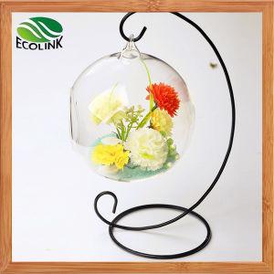 Glass Flower Vases Air Plant Glass Terrarium pictures & photos
