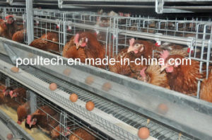 2016 New Layer Chicken Cage System pictures & photos
