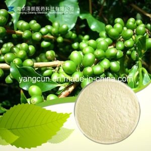 Natural CAS No: 327-97-9 98% Chlorogenic Acid pictures & photos