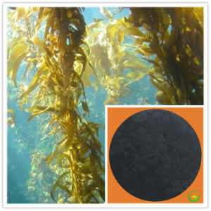 Powder Soluble Pure Organic Seaweed Extract Fertilizer pictures & photos