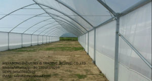 Anti Trips Insect Net, Fruit Protection Net pictures & photos