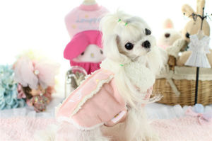 Design Winter Dog Clothing Velvet Pink Lovely Pet Coat pictures & photos