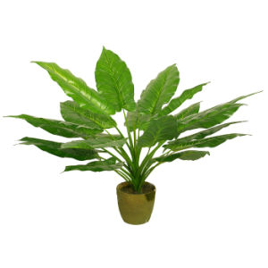 Nice Looking Green Artificial Plants pictures & photos
