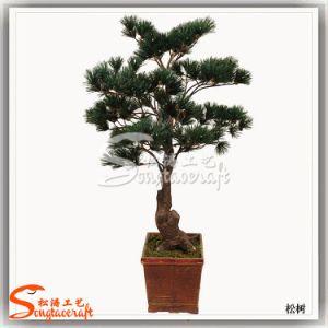 Artificial Bonsai Podocarpus Tree for Garden Decoration pictures & photos