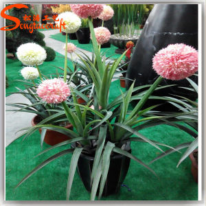 Home Decoration Artificial Real Touch Ball Flowers pictures & photos
