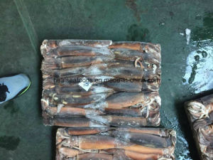 Chinese Catching Squid From Argentine Sea Area pictures & photos