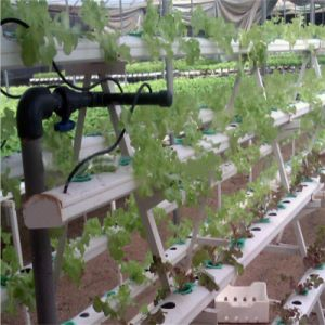 China Commercial Wholesale Hydroponics System for Greenhouse pictures & photos