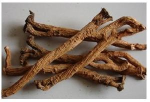 Hot Sale Factory Supply Directly Isatis Root P. E. pictures & photos