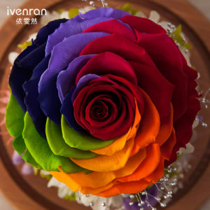 100% Natural Real Flower Handmade Touch Type Night Lamp Flower for Gift pictures & photos