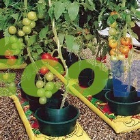 Plastic Pots for Tomato Plants, Tomato Watering Pots pictures & photos
