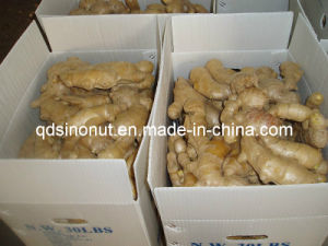 2014 Chinese Ginger (250G+) pictures & photos