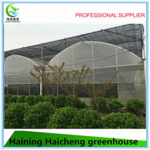 Hotsales Film Vegetable Greenhouse for Tomato pictures & photos